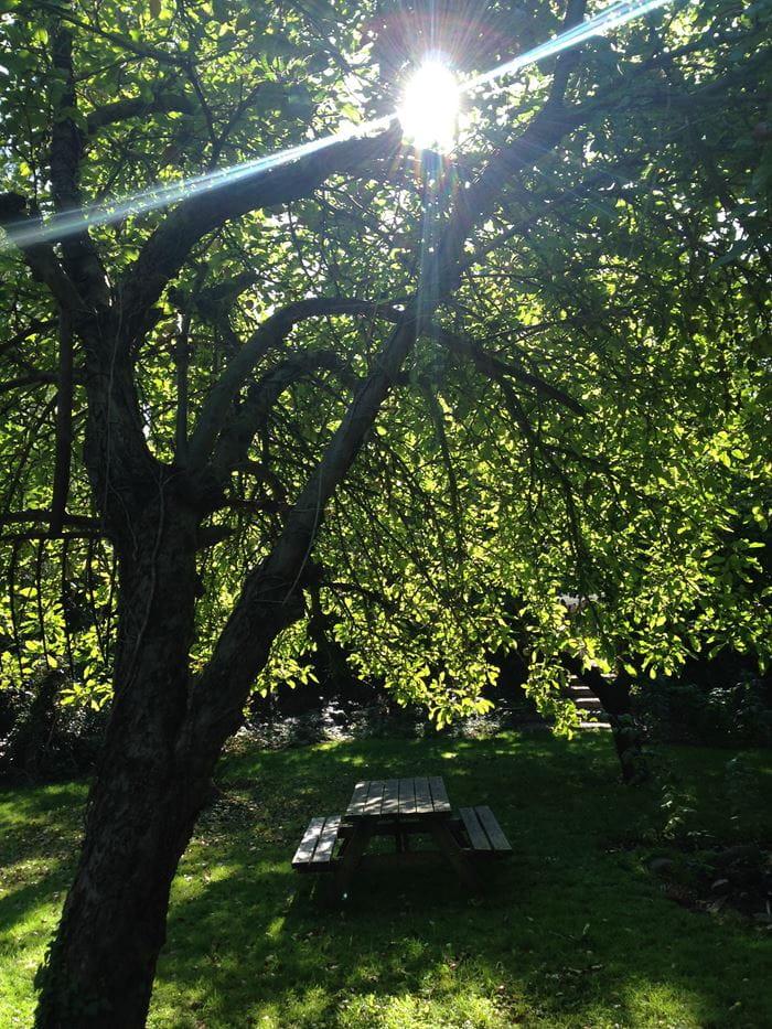 Billeder fra haven