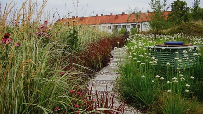 Billede af et sommertag ved Augustenborg