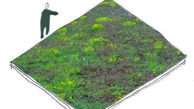 Tegning over et ekstensivt grønt tag